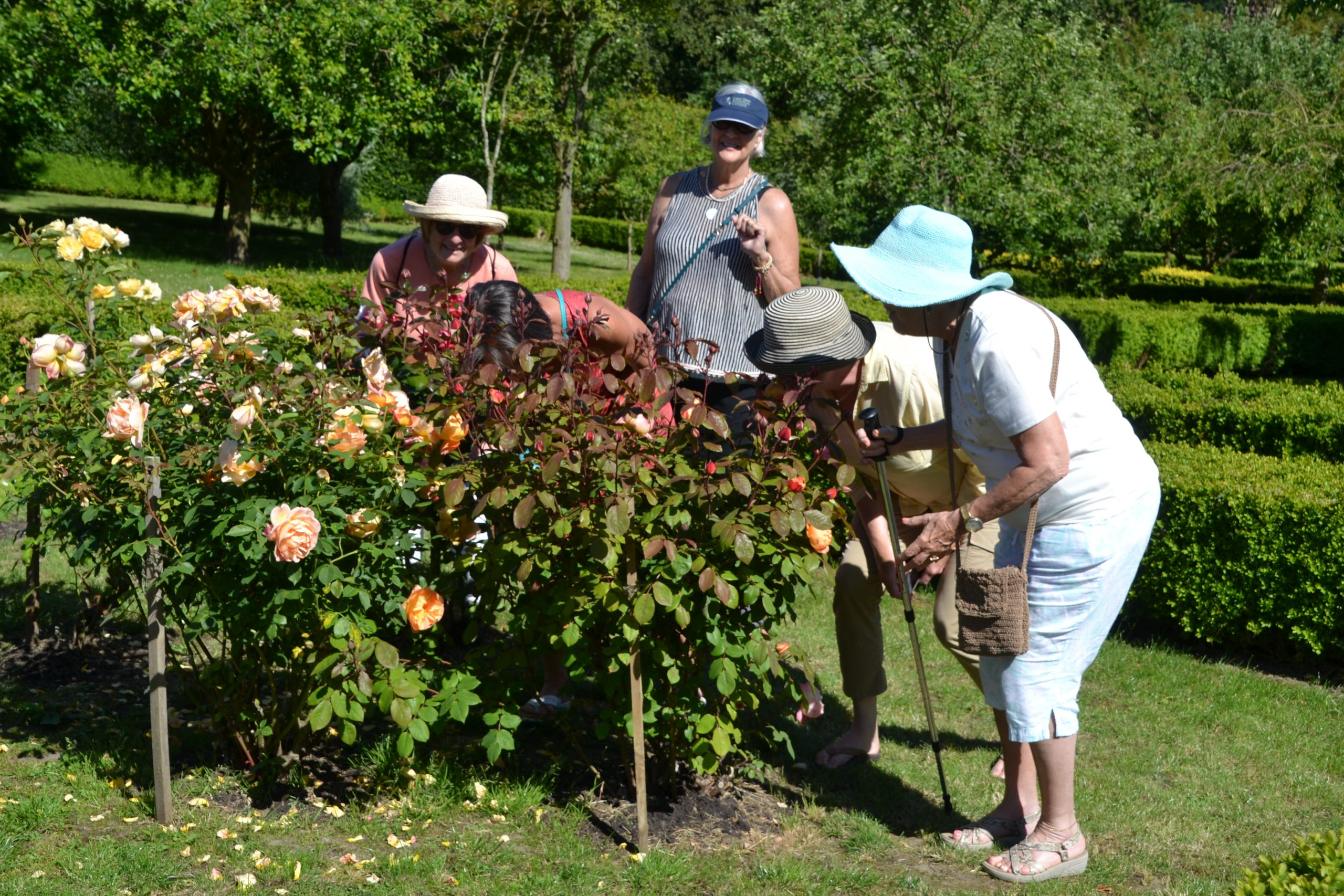 Ladies smelling roses on L and L Garden Tour trip to Yorkshire England