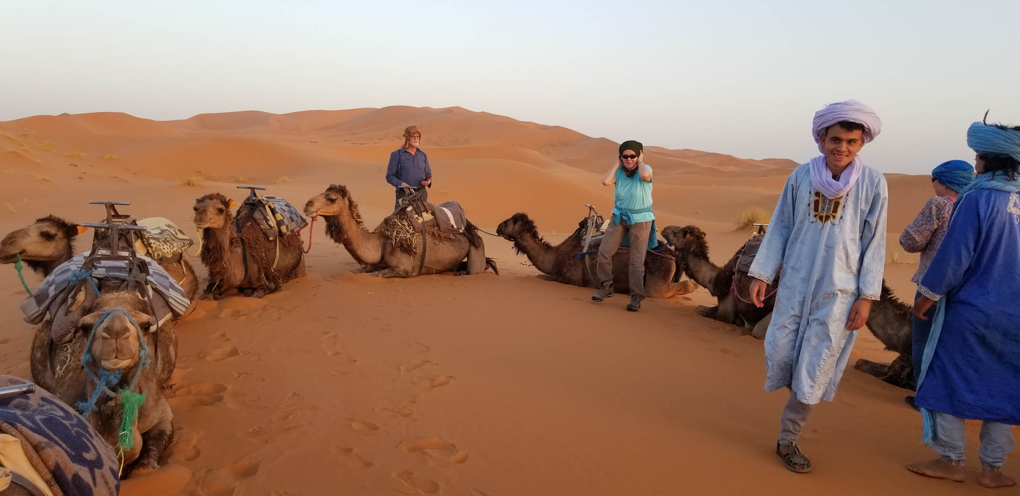 Camels laying in a row with guides and tourists in the Sahara Desert