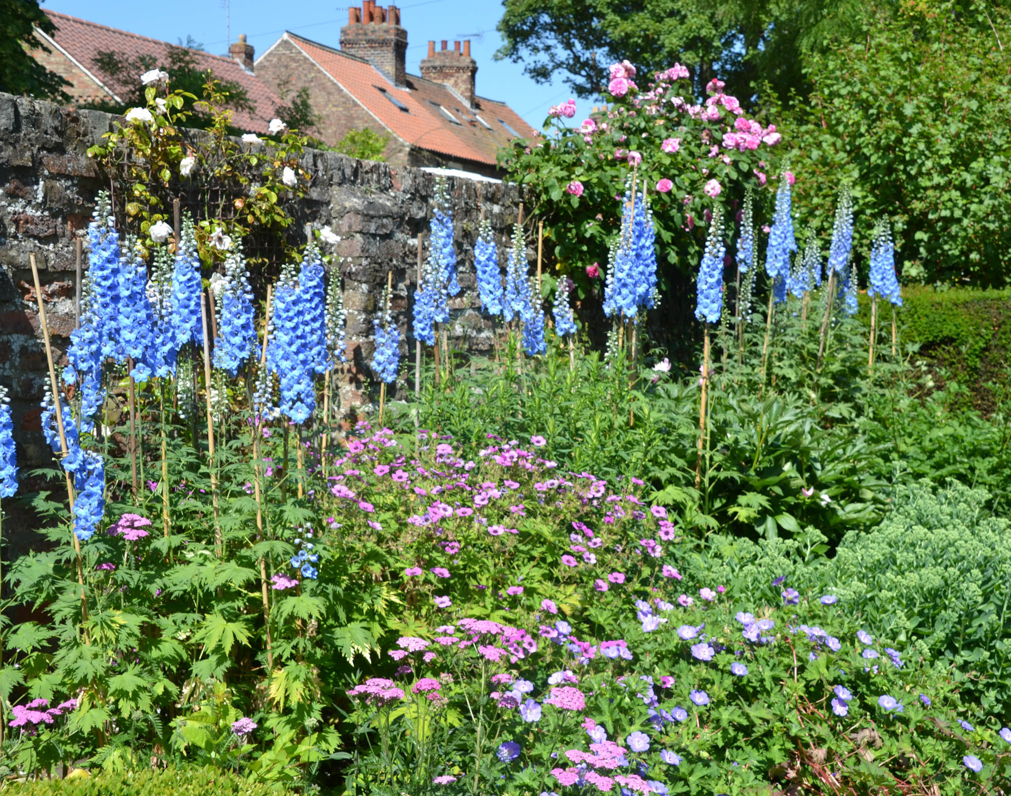 Delphiniums with English cottage in background