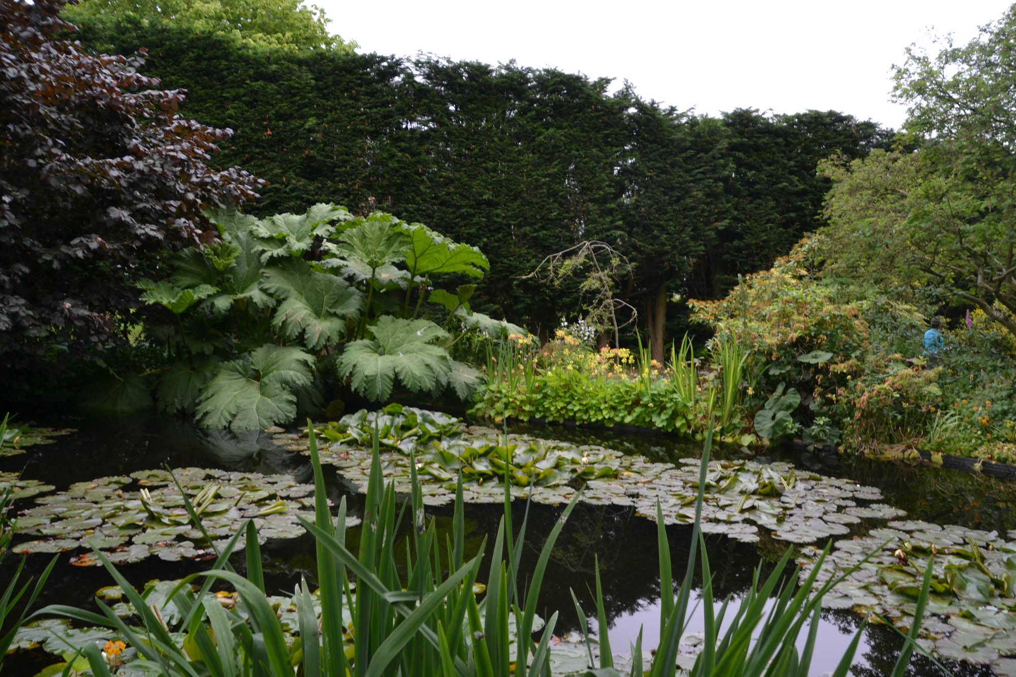 Lilypond in garden