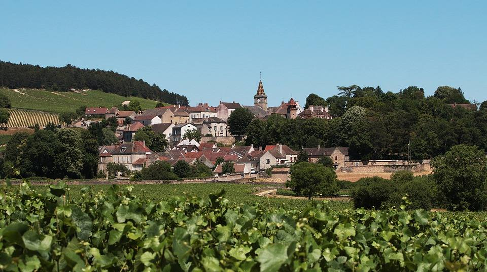 grape vines with village in the distance